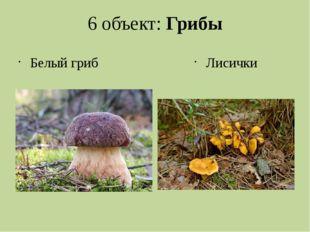 6 объект: Грибы Белый гриб Лисички
