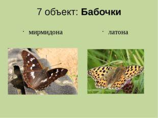 7 объект: Бабочки мирмидона латона