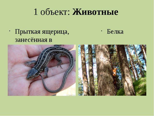 1 объект: Животные Прыткая ящерица, занесённая в красную книгу Пермского края...
