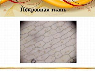 Борисова Анна Владимировна Покровная ткань