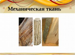 Борисова Анна Владимировна Механическая ткань