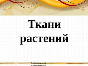 Ткани растений Борисова Анна Владимировна