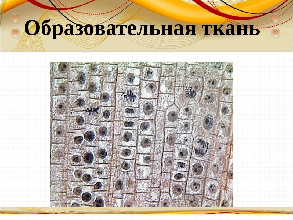 Борисова Анна Владимировна Образовательная ткань