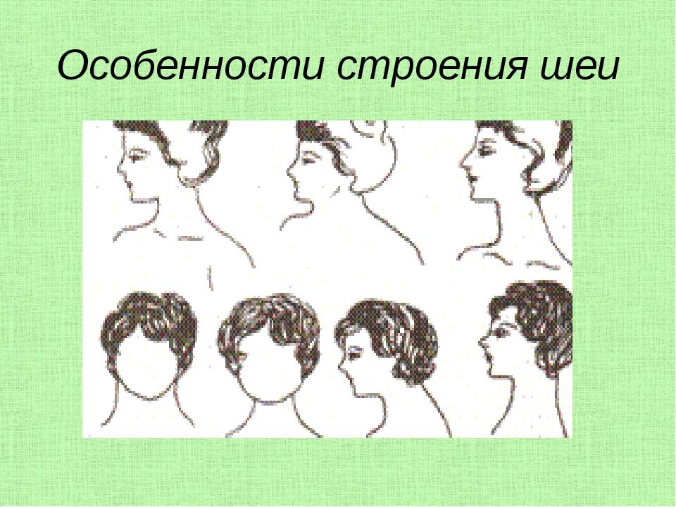 Особенности строения шеи