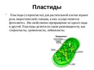 Пластиды Пластиды (хлоропласты) для растительной клетки играют роль энергетич