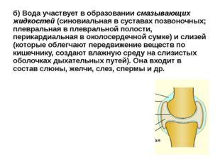 б) Вода участвует в образовании смазывающих жидкостей (синовиальная в сустава