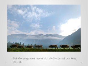 Bei Morgengrauen macht sich die Herde auf den Weg ins Tal.