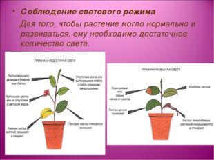 Соблюдение светового режима Для того, чтобы растение могло нормально и развив