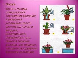 Полив Частота полива определяется состоянием растения и внешними условиями (т