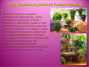 Роль комнатных растений в жизни человека Несмотря на все достижения современн