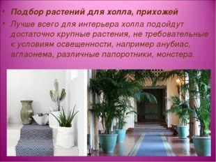 Подбор растений для холла, прихожей Лучше всего для интерьера холла подойдут