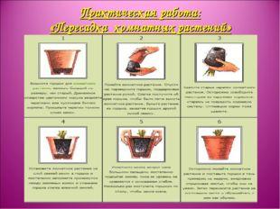 Практическая работа: «Пересадка комнатных растений»