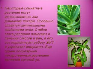 Некоторые комнатные растения могут использоваться как домашние лекари. Особе