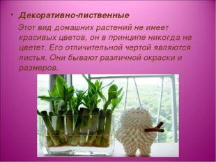 Декоративно-лиственные Этот вид домашних растений не имеет красивых цветов, о