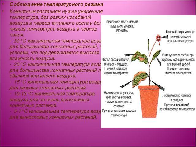 Соблюдение температурного режима Комнатным растениям нужна умеренная температ...