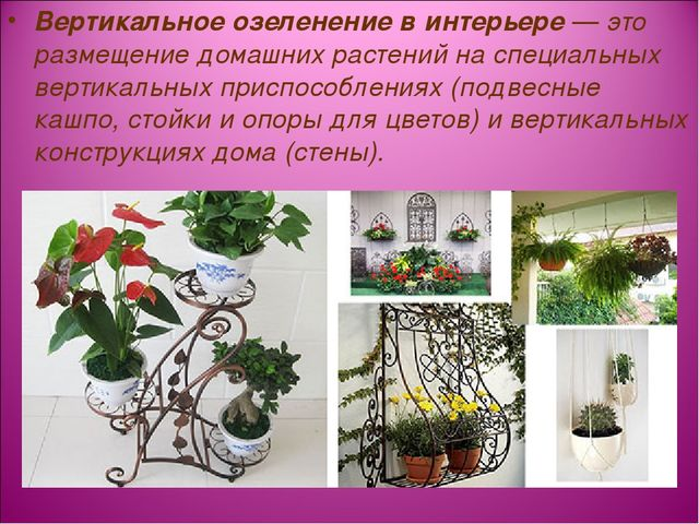 Вертикальное озеленение в интерьере — это размещение домашних растений на спе...