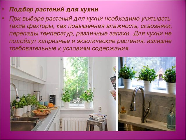 Подбор растений для кухни При выборе растений для кухни необходимо учитывать...
