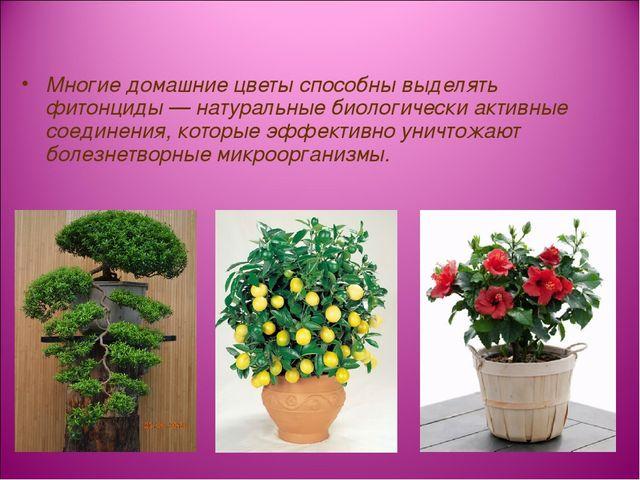 Многие домашние цветы способны выделять фитонциды — натуральные биологически...