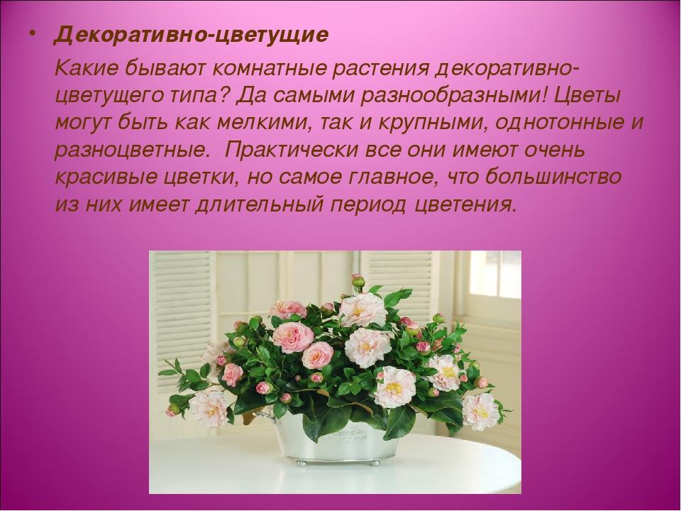 Декоративно-цветущие Какие бывают комнатные растения декоративно-цветущего ти...