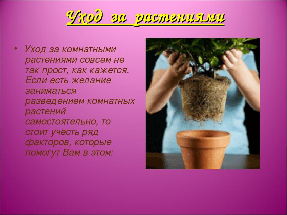 Уход за комнатными растениями совсем не так прост, как кажется. Если есть жел...