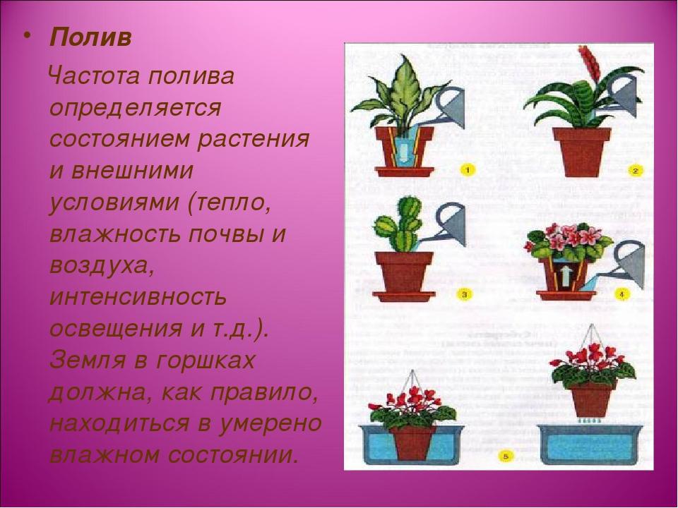 Полив Частота полива определяется состоянием растения и внешними условиями (т...