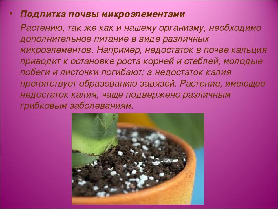 Подпитка почвы микроэлементами Растению, так же как и нашему организму, необх...