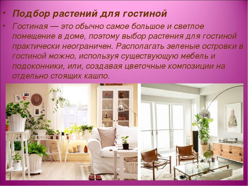 Подбор растений для гостиной Гостиная — это обычно самое большое и светлое по...
