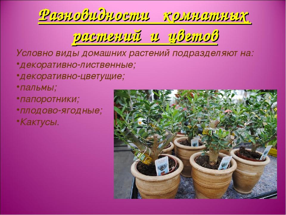 Разновидности комнатных растений и цветов Условно виды домашних растений подр...