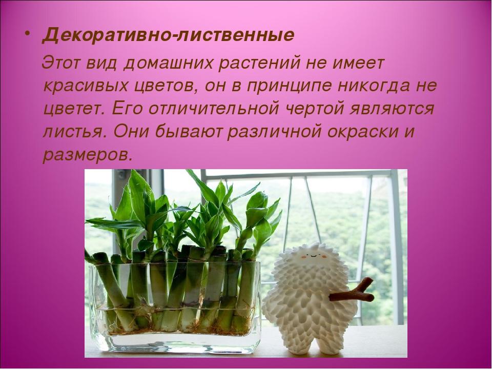 Декоративно-лиственные Этот вид домашних растений не имеет красивых цветов, о...