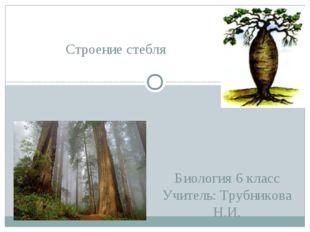 Биология 6 класс Учитель: Трубникова Н.И. Строение стебля