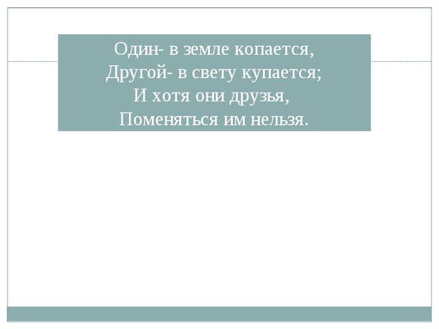 Один- в земле копается, Другой- в свету купается; И хотя они друзья, Поменять...