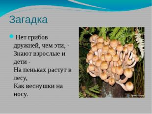 Загадка Нет грибов дружней, чем эти, - Знают взрослые и дети - На пеньках рас