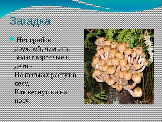 Загадка Нет грибов дружней, чем эти, - Знают взрослые и дети - На пеньках рас...