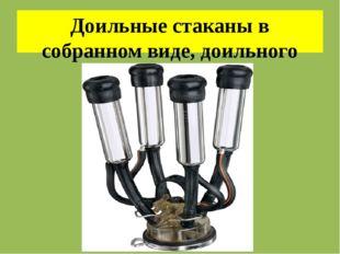 Доильные стаканы в собранном виде, доильного аппарата «волга»