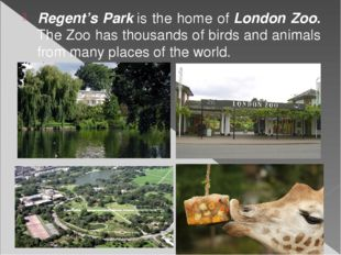 Regent's Parkis the home ofLondon Zoo. The Zoo has thousands of birds and a