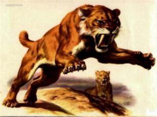 Бросив тушу, львица скроется в степи. Вот еще один способ древнейшей охоты. П