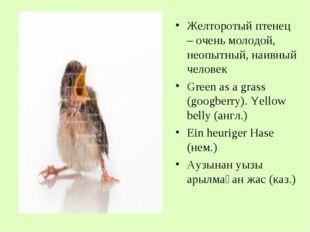 Желторотый птенец – очень молодой, неопытный, наивный человек Green as a gras