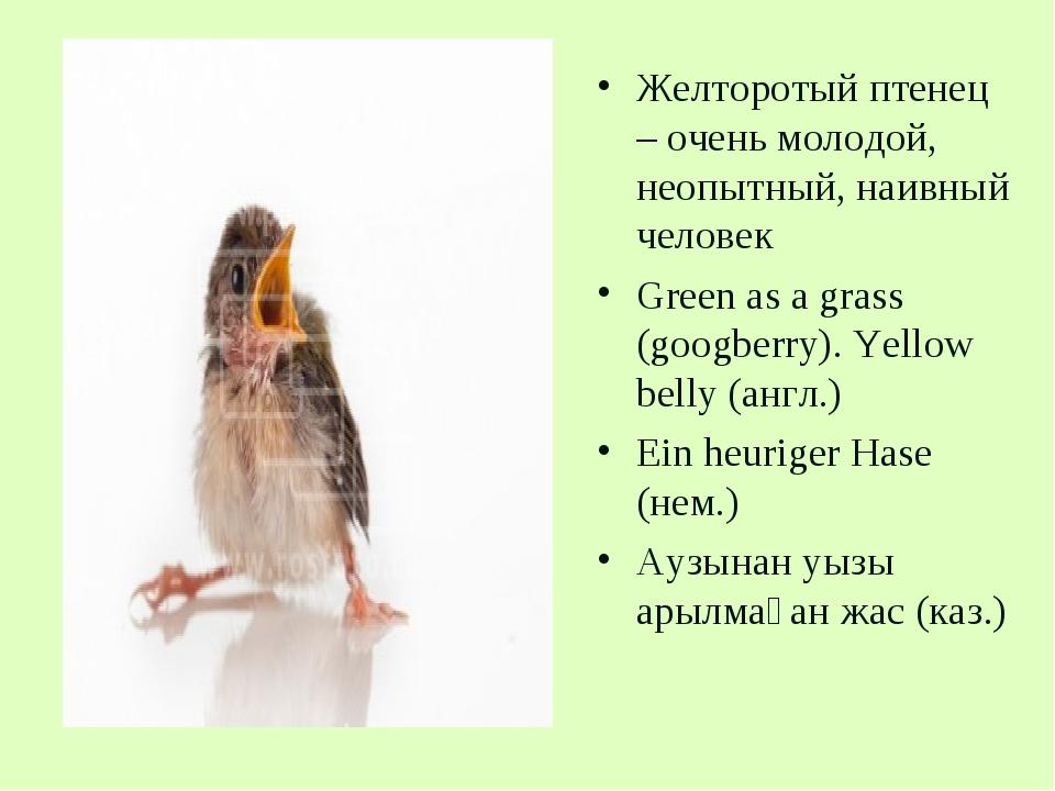 Желторотый птенец – очень молодой, неопытный, наивный человек Green as a gras...
