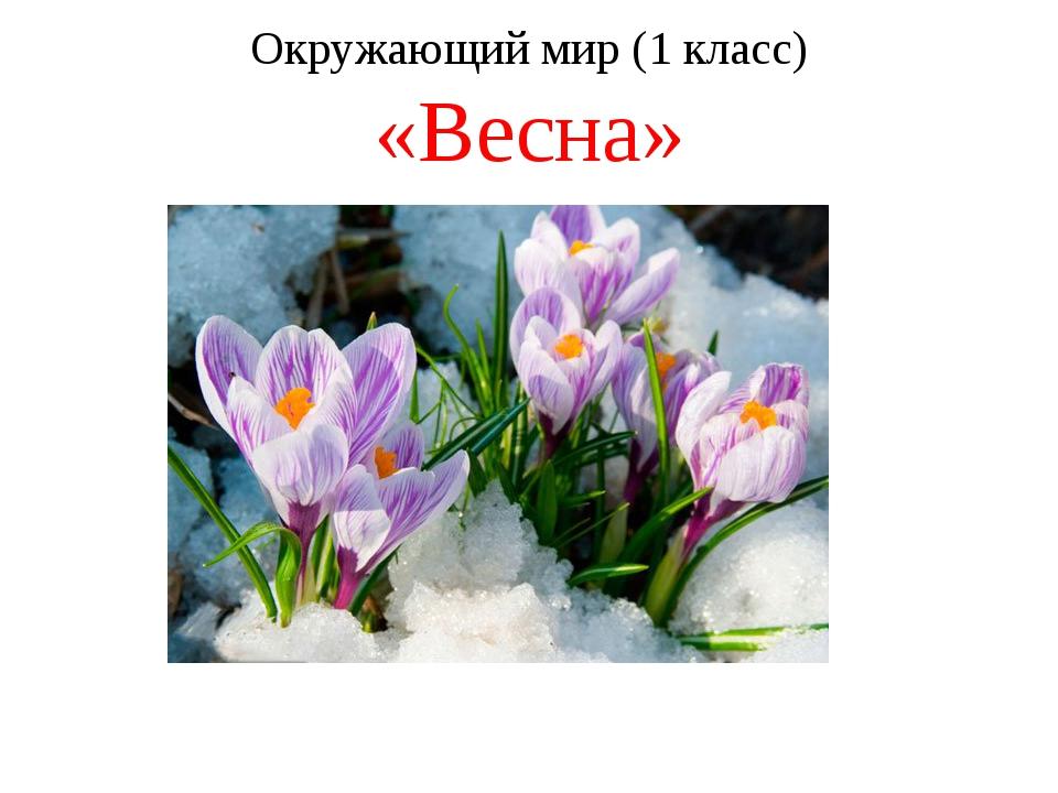 Окружающий мир (1 класс) «Весна»
