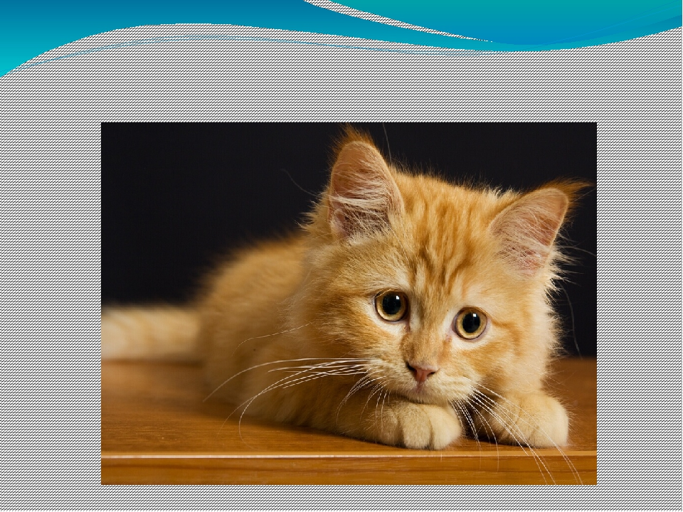 Котик мой любимый, Мягкий, как подушка.