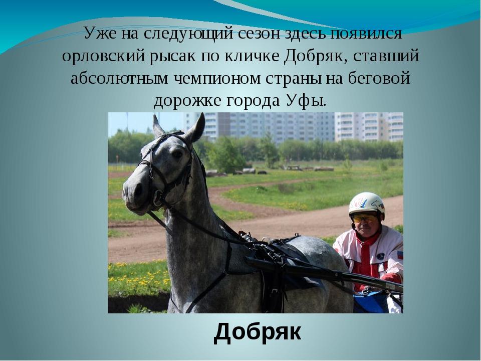 Добряк Уже на следующий сезон здесь появился орловский рысак по кличке Добряк...