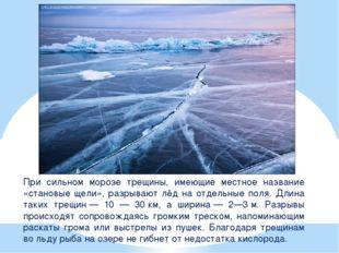 При сильном морозе трещины, имеющие местное название «становые щели», разрыва
