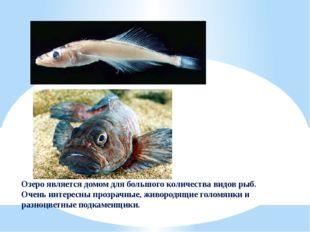 Озеро является домом для большого количества видов рыб. Очень интересны прозр