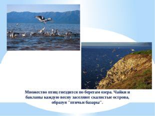 Множество птиц гнездится по берегам озера. Чайки и бакланы каждую весну засел