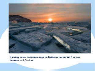 К концу зимы толщина льда на Байкале достигает 1м, а в заливах— 1,5—2м.