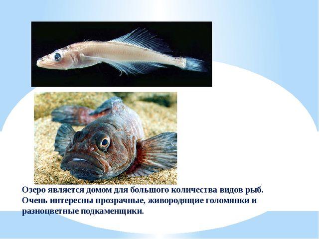 Озеро является домом для большого количества видов рыб. Очень интересны прозр...