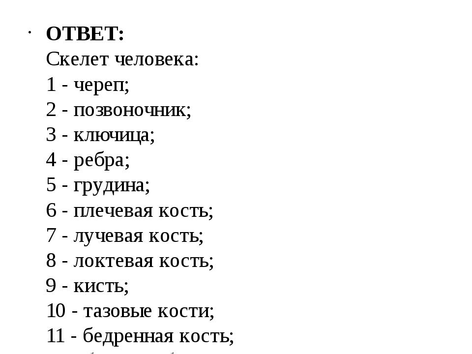 ОТВЕТ: Скелет человека: 1 - череп; 2 - позвоночник; 3 - ключица; 4 - реб...