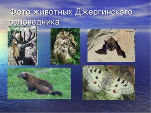 Фото животных Джергинского заповедника