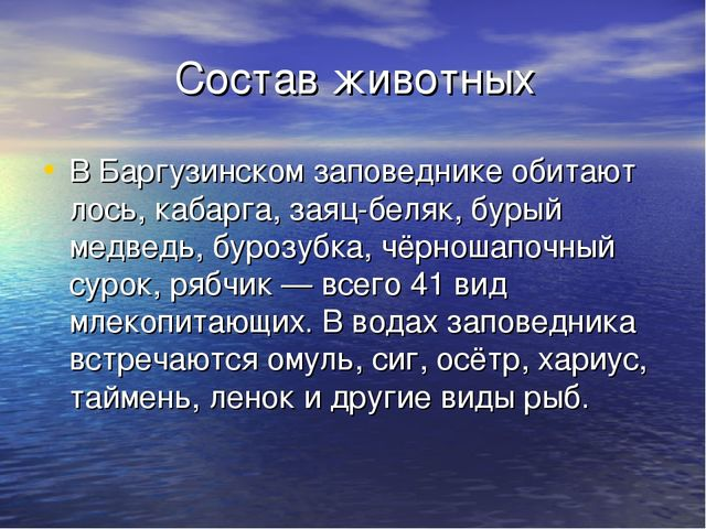 Состав животных В Баргузинском заповеднике обитают лось, кабарга, заяц-беляк...