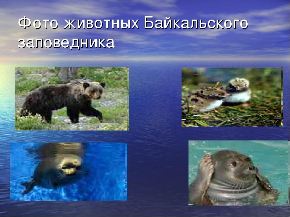 Фото животных Байкальского заповедника